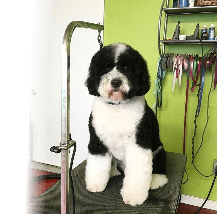 Dog Boarding & Grooming in Eugene & Springfield OR